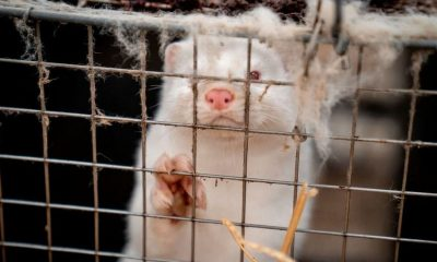 Fur industry faces
