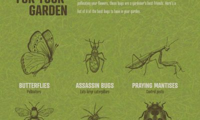 Good Bugs For Your Yard