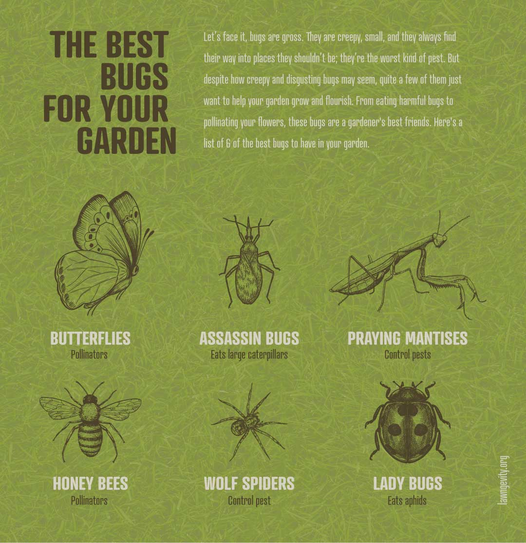 Good-Bugs-For-Your-Yard